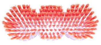 Trillend Varkenshaar van een Schoonmakende Borstel van de Lente. stock afbeeldingen