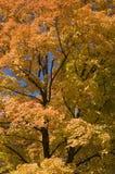 Trillende bomen Royalty-vrije Stock Afbeeldingen