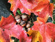 Trillende Dalingskleuren Stock Fotografie