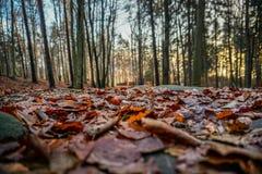 Trillende de herfstkleuren op een zonnige dag in het bos stock fotografie