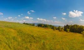 Trillende de zomerweide met azuurblauwe hemel Royalty-vrije Stock Fotografie