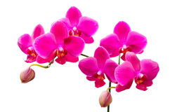 Trillende gekleurde lilac bloemen van orchideeën stock afbeeldingen