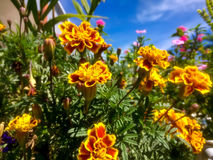 Trillende gele bloemen Stock Afbeelding