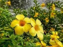 Trillende Gele Bloemen door de Vijver royalty-vrije stock fotografie