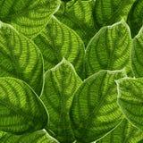 Trillende geweven groene bladeren met aders naadloos patroon vector illustratie