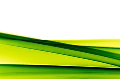 Trillende groene achtergrond op wit Stock Foto
