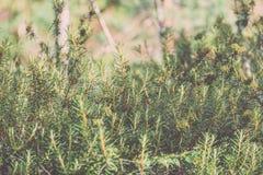 trillende groene de lente verse bladeren van boom in de lente - uitstekend F Royalty-vrije Stock Foto