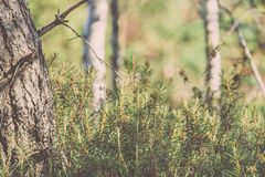 trillende groene de lente verse bladeren van boom in de lente - uitstekend F Royalty-vrije Stock Afbeelding