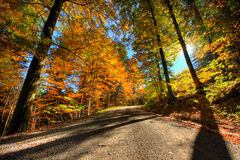 Trillende kleuren van bos in de herfst Royalty-vrije Stock Afbeeldingen