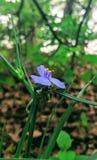 Trillende kleuren van de lente stock afbeeldingen