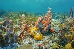 Trillende kleuren van onderwater overzeese sponsen Stock Afbeeldingen