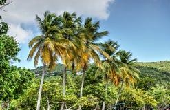 Trillende palmen Stock Afbeeldingen