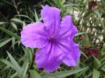 Trillende purpere bloem Royalty-vrije Stock Afbeeldingen