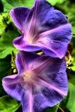 Trillende purpere bloemen stock foto