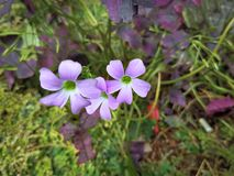 Trillende Purpere Bloemen in het Park royalty-vrije stock fotografie