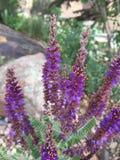 Trillende purple stock fotografie