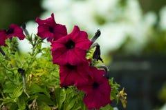 Trillende rode bloem met bloemachtergrond stock foto