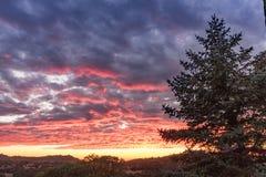 Trillende roze, oranje, gele en lavendelzonsondergang, landelijke lanscape, grote pijnboomboom, de levende hemel van de eikenzons royalty-vrije stock fotografie