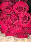 Trillende rozen royalty-vrije stock afbeelding