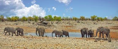 Trillende waterhole in Etosha met een kudde van olifanten Royalty-vrije Stock Afbeeldingen