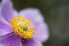 Trillende wilde bloem met ondiepe diepte van gebied Royalty-vrije Stock Afbeelding