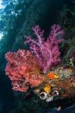 Trillende Zachte Koralen in huidig-Geveegd Kanaal in Raja Ampat stock afbeelding