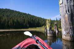 Trillium与树干的湖风景在水和皮船 库存照片