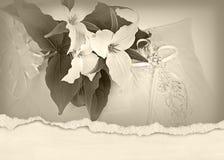 Trillium bridal bouquet on pillow. Trillium bridal bouquet on wedding pillow with torn edge border Royalty Free Stock Photography