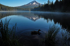 Trillium Lake early morning with Mount Hood, Oregon, USA Royalty Free Stock Image