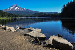 Trillium Lake early morning with Mount Hood, Oregon, USA Royalty Free Stock Images