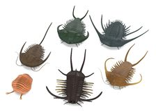 Trilobite animals - 6 different kinds Royalty Free Stock Image
