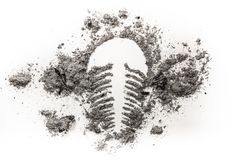Trilobite fossil drawing made in ash, dirt or sand Stock Images