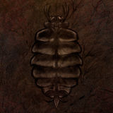 Trilobite Fossil Illustration. Digital painting of a trilobite fossil set in ancient stone Royalty Free Stock Images