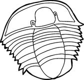 Trilobite Outline Royalty Free Stock Images