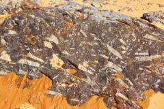 Trilobite stone fossils in Sahara Desert Stock Photos