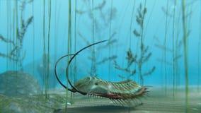 Trilobite sull'animazione del fondo del mare video d archivio