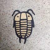 trilobites 免版税库存照片