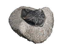 Trilobites Stockbild