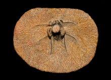 Trilobites Stock Photo