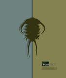 Trilobites Stock Images