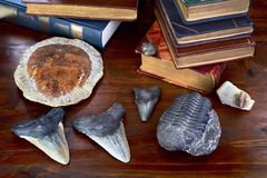 Trilobites and Megalodon Shark Teeth. Stock Photography
