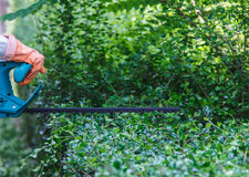 Trim hedge. Man trim hedge with electric equipment Stock Photography