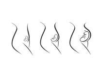Trimestres del embarazo - etapas de desarrollo Imagen de archivo