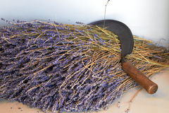 Trimmed bundle of lavender with a sickle Royalty Free Stock Photos
