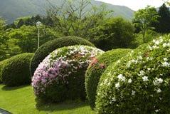 Trimmed bush. Trimmed flower bush in the garden Stock Photo