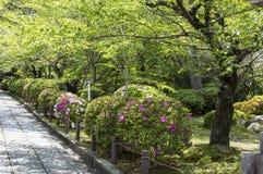 Trimmed bush. Trimmed flower bush in a japanese garden Stock Images