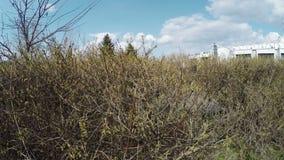 Trimmed bushes in sreet stock footage