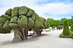 Trimmed cypresses with Retiro park Stock Image