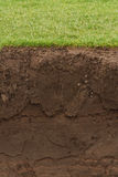Trimmed Grass over exposed soil. Cross section of a grass lawn with exposed soil below Royalty Free Stock Photography