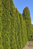 Trimmed Green Fence Royalty Free Stock Image